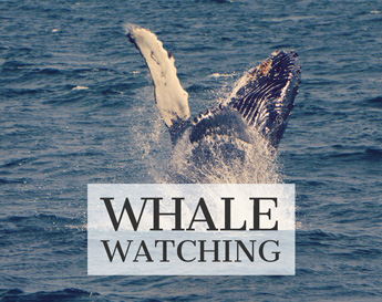 Alaskan charters whale watching image
