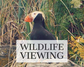 Alaskan charters wildlife viewing image