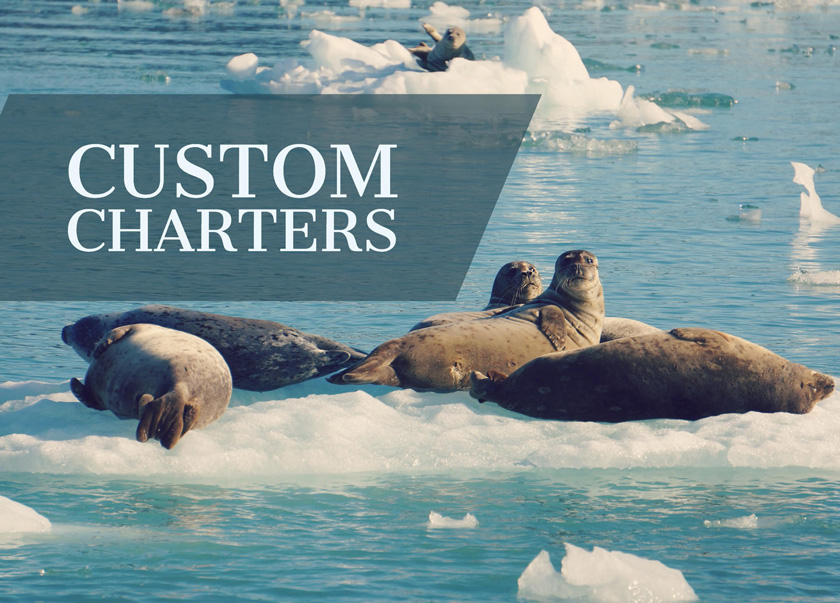 Seals basking on floating ice on one of Babkins custom Alaska boat charters