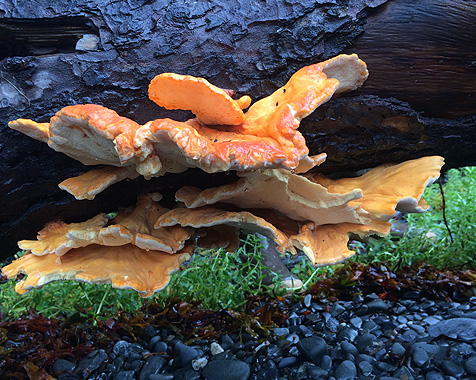 Funghi Image - Babkin Educational Alaska Wildlife & School Trips
