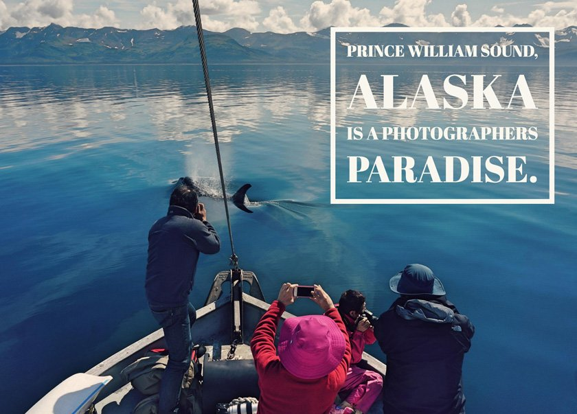 Client taking wildlife phot on a custom Prince Wiliam Sound Cruise